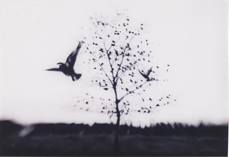 Bye Bye, Blackbird